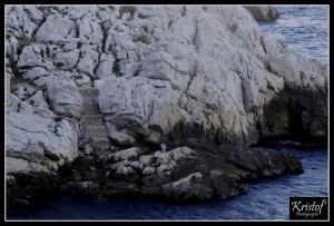 Dans les Calanques de Marseille